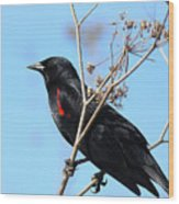 Red-winged Blackbird . 40d5718 Wood Print