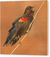 Red-winged Blackbird Belting Out Spring Song Wood Print