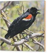 Red Winged Blackbird Wood Print