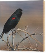Red Winged Blackbird Call Wood Print
