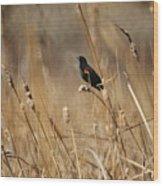 Red Winged Blackbird Wood Print by Ernie Echols