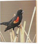 Red Winged Blackbird I I Wood Print