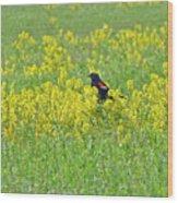 Red-winged Blackbird In Wild Mustard Wood Print