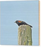 Red-winged Blackbird On Lookout Duty Wood Print