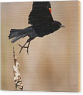 Red-winged Takeoff Wood Print