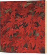 Red With Envy Wood Print