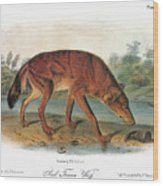 Red Wolf (canis Lupus) Wood Print