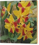 Red Yellow Orchids Wood Print