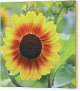 Red Yellow Sunflower Wood Print