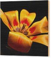 Red-yellow Tulip 1 Wood Print
