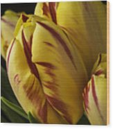 Red Yellow Tulip Wood Print