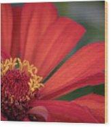 Red Zina Wood Print