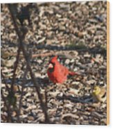 Redbird And American Golden Finch Wood Print