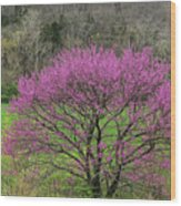 Redbud And Field In Jefferson County Wood Print