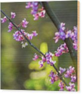 Redbud Bloom  Wood Print