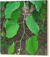 Redbud Green Wood Print
