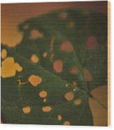 Redbud In Fall Wood Print