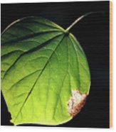 Redbud Leaf Wood Print