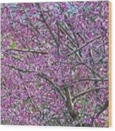 Redbud Tree Wood Print