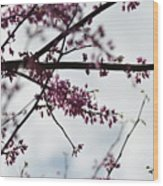 Redbuds In The Mist Wood Print