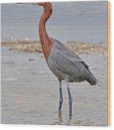 Reddish Egret Wood Print