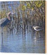 Reddish Egret And Yellowlegs Wood Print