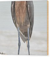 Reddish Egret Stands Tall Wood Print
