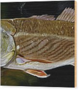 Redfish Study  Wood Print