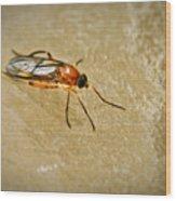 Redfly With Black Eyes Wood Print