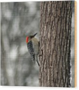 Redheaded Woodpecker Wood Print