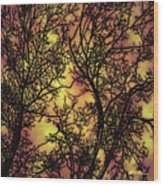 Rediscovering The Light In The Ordinary Wood Print