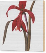 Redout�: St. James Lily Wood Print