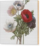Redoute: Anemone, 1833 Wood Print by Granger