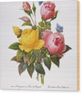 Redoute: Roses, 1833 Wood Print by Granger