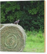 Redtailed Hawk Wood Print