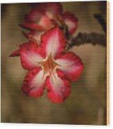 Redwhite Flower Wood Print