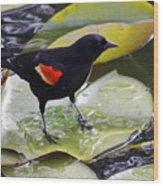 Redwinged Black Bird On A Lily Pad Wood Print