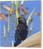 Redwinged Blackbird Wood Print