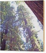 Redwood Forest 1 Wood Print