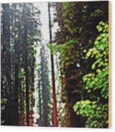 Redwood Forest 5 Wood Print