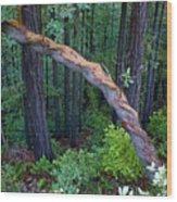 Redwood Forest Wood Print