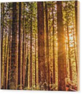 Redwood Forest Wood Print