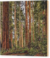 Redwood Forest Landscape Wood Print