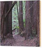 Redwood Grove Wood Print