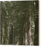 Redwood Highway Wood Print