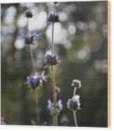 Redwood Meadow Light Wood Print