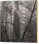 Redwood Mystery Wood Print