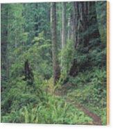 Redwood Park Trail Wood Print