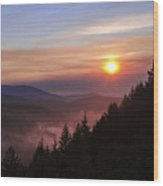 Redwood Sun Wood Print
