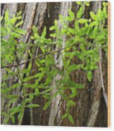 Redwood Tree Art Prints Baslee Troutman Wood Print